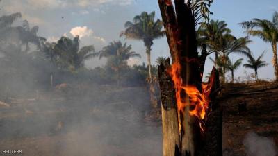 """""""كارثة الأمازون"""".. مشاهير يدقون ناقوس الخطر"""