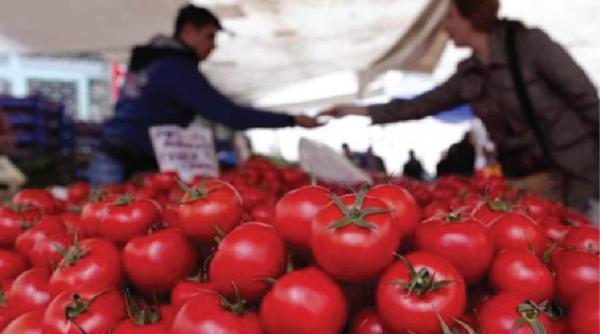 توقعات بإرتفاع انتاج الطماطم في البصرة لأكثر من 5 الاف طن