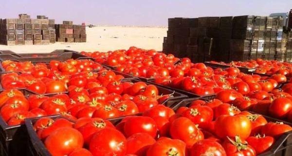 قائمقام الزبير يدعو الى أغلاق الحدود أمام الطماطم المستوردة ودعم وحماية المنتج الوطني