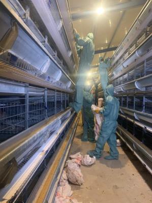 """اللجنةُ المشكلة بأمرِ محافظ البصرة تباشرُ إجراءاتها لمواجهةِ """"انفلونزا الطيور"""""""
