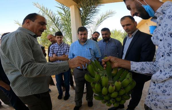 حكومة البصرة المحلية تزور مختبر الزراعة النسيجية