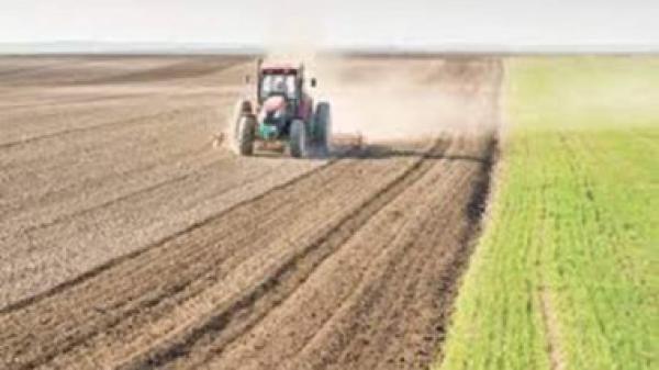 433 الف دونم لزراعة محصول الشلب خلال الموسم الحالي