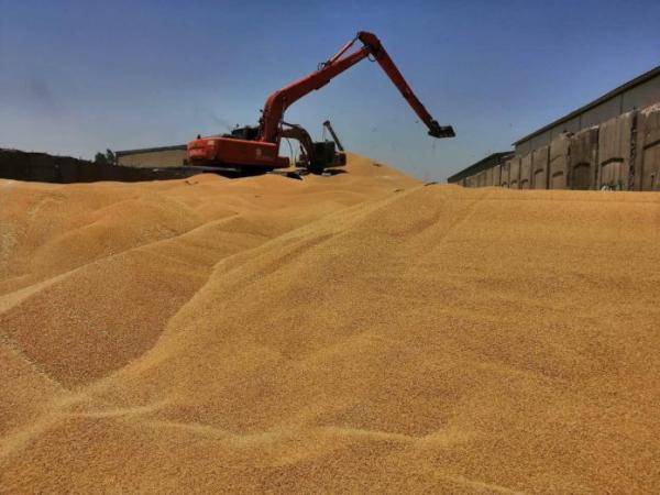 التجارة: كميات الحنطة المسوقة ستصل إلى مليون ونصف طن بنهاية الاسبوع