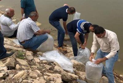 اعلان عن اطلاق 8 ملايين إصبعية أسماك في محمية الصافية وهور المسحب في قضاء القرنة